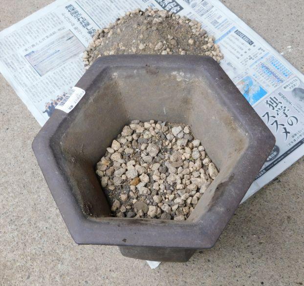 苗が5センチ埋まるように土を入れた鉢
